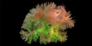研究人员对特定行为的大脑信号模式进行分离和解码-南加州大学中文官网