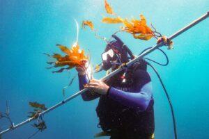 USC科学家可能已开启以海带作为主要生物燃料来源的大门-南加州大学中文官网