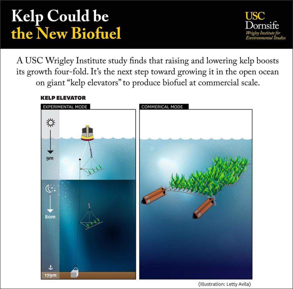 海带可能成为新型生物燃料-南加州大学中文官网